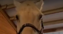 Thursday Video: Equine Confessions