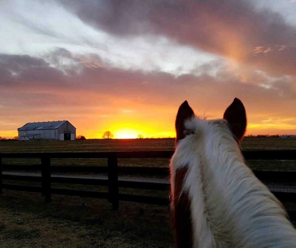 Photo Challenge: 18 Gorgeous Horsey Sunsets