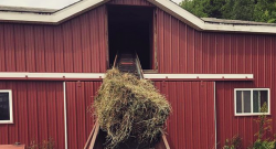 Friday Poll: Which Of These Have You Found In a Bale?