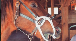 Kentucky Performance Products: Equine Dentistry