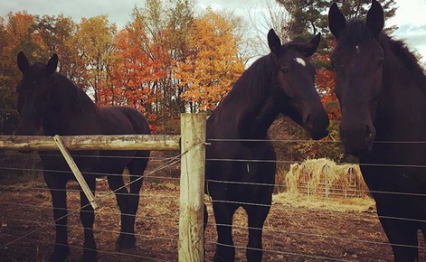 7 Times I Totally Dodged a Bullet in My Horse Life