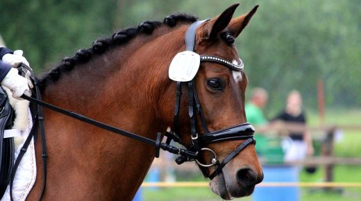 Great Yorkshire Show Rider Weight Policy Spurs Debate