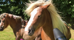 Thursday Video: The Pony Spa