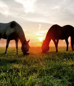 Photo Challenge: 5 Picture-Perfect Horsey Sunrises
