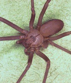 Horses & Entomology: Here There Be Spiders
