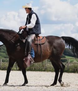 Movie Review: 'Steve Halfpenny Light Hands Equitation' Documentary