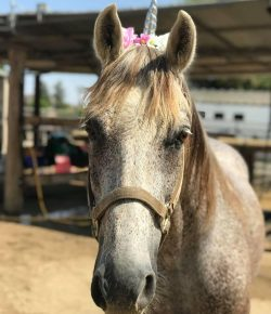 Standing Ovation by Ovation Riding: The Fluffball Foundation Benefits Forgotten Horses Rescue