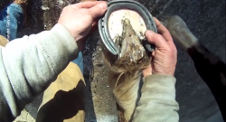 KER Friday Video: From the Farrier's Perspective