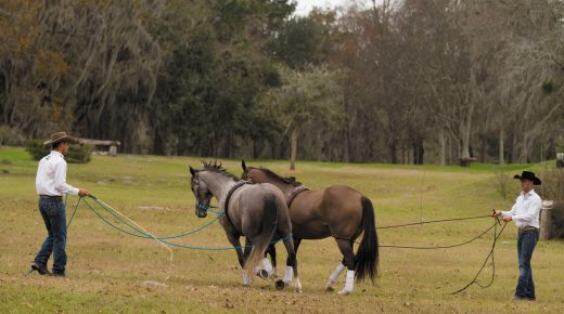 Stand By Me: Long-Reining Basics