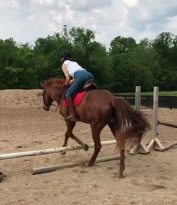 Elation of an Everlasting Riding Student