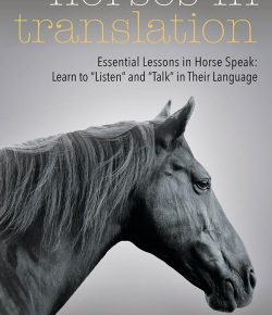 Book Review: 'Horses In Translation'