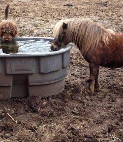 Photo Challenge: 27 Loyal Barn Dogs