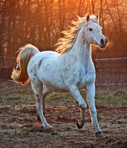 Horse Breeds to Complement YOU