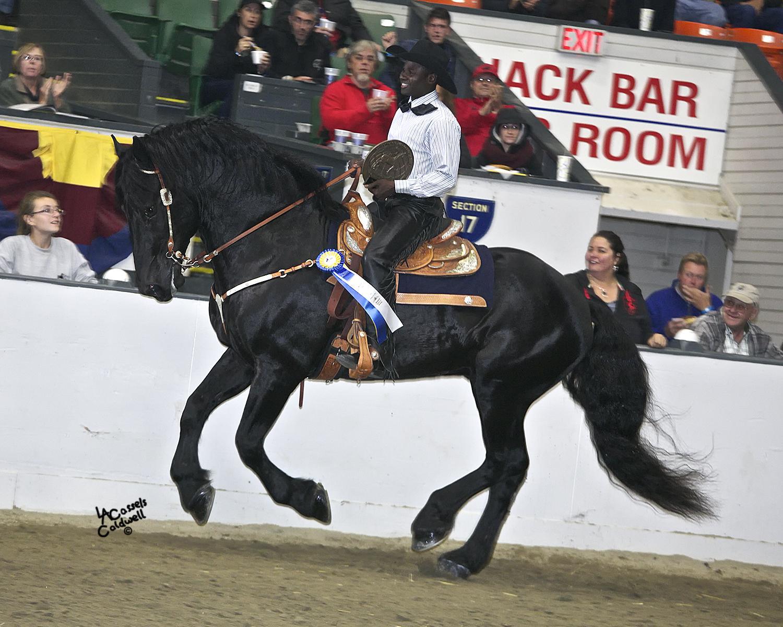 World Percheron Congress Thunders Into Des Moines In October Horse Nation