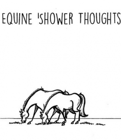 The Idea of Order: Equine Shower Thoughts