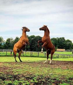 Photo Challenge: 3 Horses Enjoying Fall