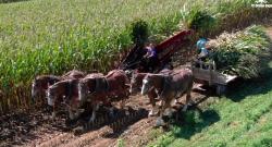 World Equestrian Brands Drone Cam: Harvest