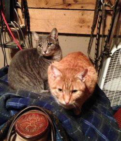 10 Reasons To Have Barn Cats