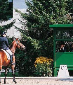 'I've Got Time': Horse Training's Key Words