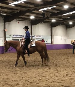 The Academic Equestrian: Little Brother's First Show