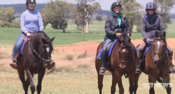 Standing Ovation by Ovation Riding: Sue Ellen Lovett