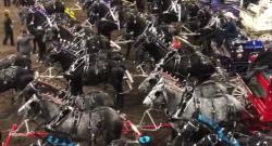 KER Friday Video: 108 Percherons
