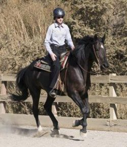 Kentucky Performance Products: Can a Horse Have Too Many Amino Acids?