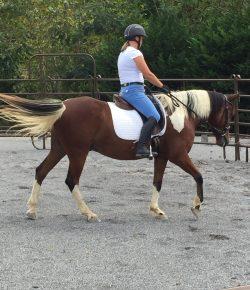 Happy, Healthy & Horsey: Support as We Change