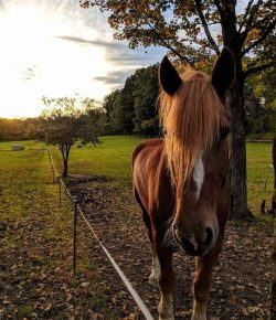 Photo Challenge: 10 Beautiful Horsey Autumn Scenes