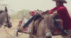 Standing Ovation by Ovation Riding: Biblioburro