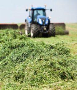 Kentucky Performance Products: Does Alfalfa Make Horses Hot?