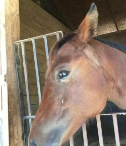 Happy, Healthy & Horsey: The Challenge Begins