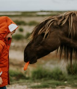 Introducing Kids to Horses: How Animals Can Help a Child Develop