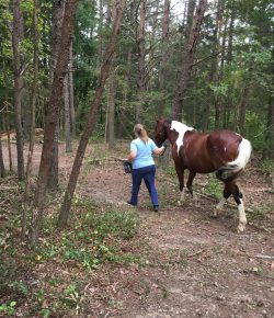 Happy, Healthy & Horsey: The Challenge Continues