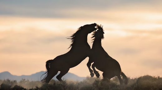 'Taking Back the West:' A Comprehensive Examination of the Wild Horse & Burro Crisis
