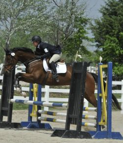 Yay or Neigh: Is Conformation Truly a Deal-Breaker?