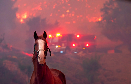 California Horse Community Needs Help In Deadly Wildfires