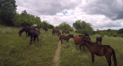 Video: In Search of Europe's Wild Horses