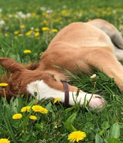 Photo Challenge: 23 Horses Doin' a Snooze