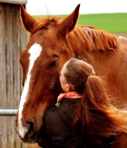 Girl Picks Out Horse's Hooves… What She Does Next Will Surprise You