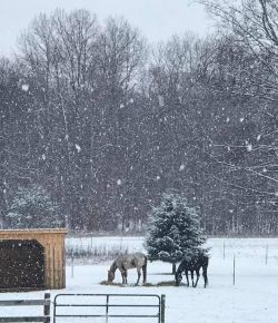 Photo Challenge: Horses in the First Snow