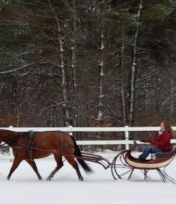 The Academic Equestrian: Sleigh Bells Ring