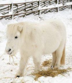 Kentucky Performance Products: Feeding Special Needs in the Winter