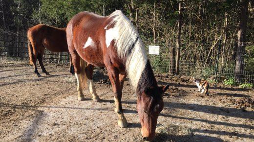 Happy, Healthy & Horsey: Perspective