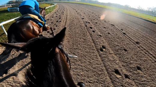 World Equestrian Brands Helmet Cam: Run Like the Wind!
