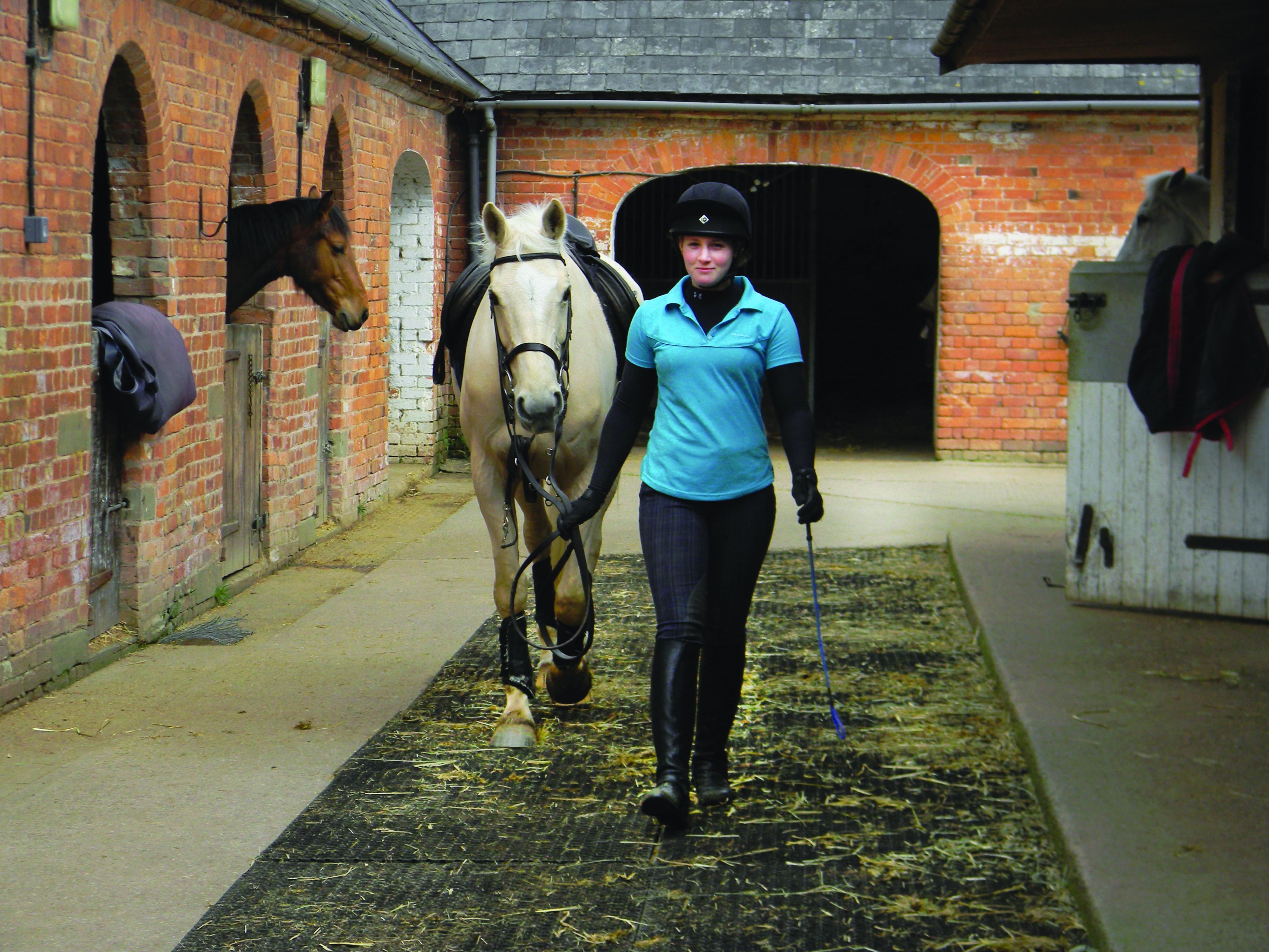 Post University To Offer First Online Equine Studies