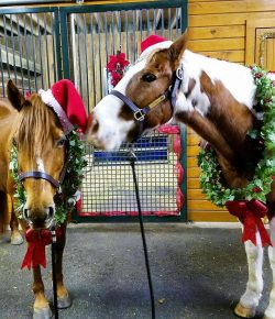 Photo Challenge: 15 Horses Ready For the Holidays