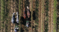Thursday Video: Draft Horses & Vineyards