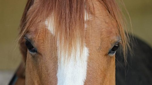 Proposed South Carolina Bill Would Help Track Horse Sales