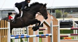 Olympic & WEG Jumpers to Be Auctioned Online